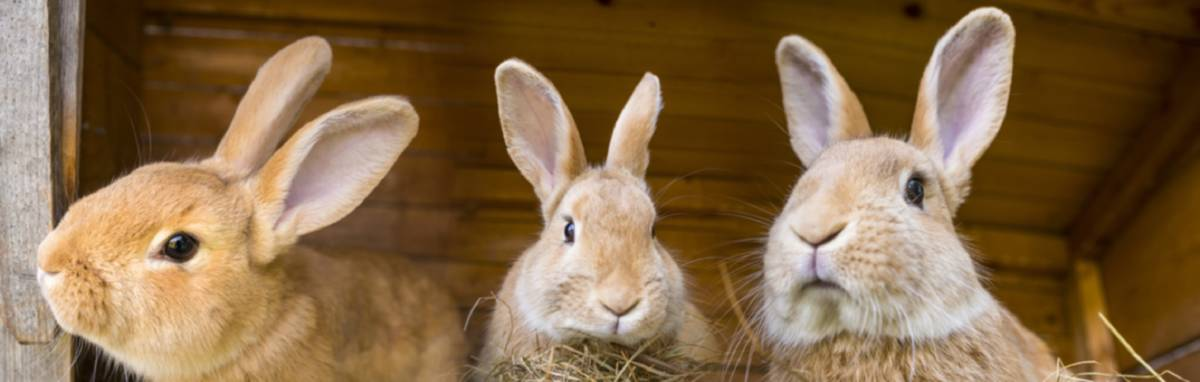 BUNNY BUDDIES: Rabbits are social animals and really need the companionship of another rabbit.